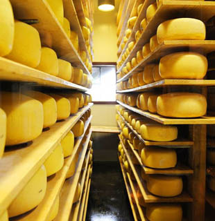 Cheese, fat and moisture measurements, quality control, NDC